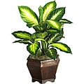 Silk Golden Dieffenbachia Plant with Wood Vase