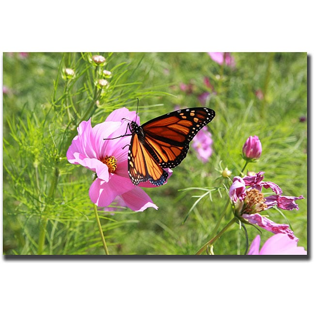 Cary Hahn 'Spring I' Gallery-Wrapped Canvas Art