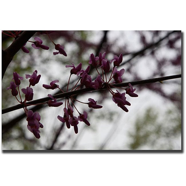 Cary Hahn 'Purple Bloom' Canvas Art