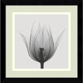 Steven N. Meyers 'Triumph Tulip' Framed Art Print