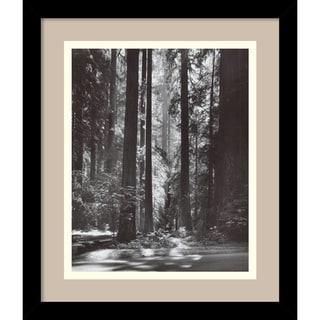 Ansel Adams 'Redwoods, Founders Grove, 1966' Framed Art Print