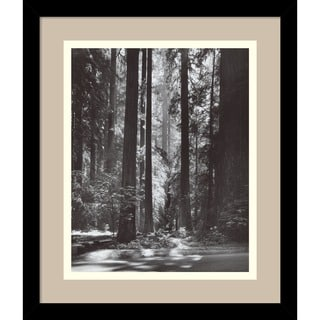 Ansel Adams 'Redwoods, Founders Grove, 1966' Framed Art Print