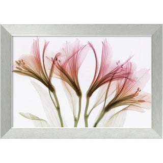Steven N. Meyers 'Alstromeria' Framed Contemporary Art Print