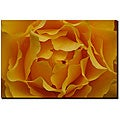 Kurt Shaffer 'Hypnotic Yellow Rose' Canvas Art
