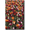 Kurt Shaffer 'Multi-colored Tulips' Canvas Art