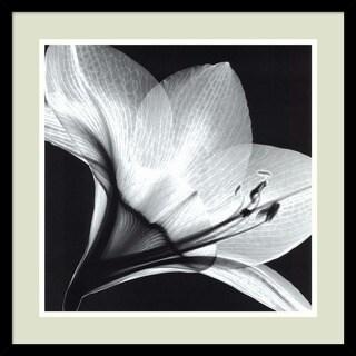 Steven N. Meyers 'Amaryllis 1' Framed Art Print