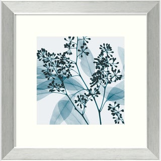 Steven N. Meyers 'Eucalyptus II' Small Framed Art Print