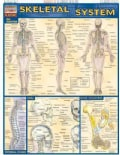 Skeletal System Quick Study Reference Guide (Cards)