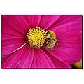 Kurt Shaffer 'Cosmos Bee' Gallery-wrapped Canvas