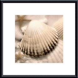 Donna Geissler 'Iridescent Seashell II' Framed Print