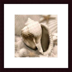 Donna Geissler 'Iridescent Seashell III' Wood Framed Print