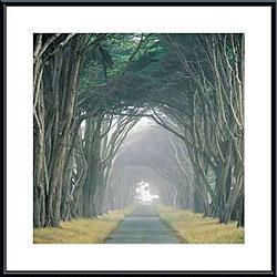 E. Loren Soderberg 'Corridor of Cypress' Metal Framed Art Print