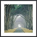 E. Loren Soderberg 'Corridor of Cypress' Metal Framed Art Print