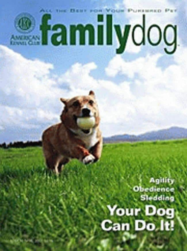 Magazine Family Dog Akc Family Dog 12 Issues For