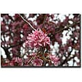 Cary Hahn 'Pink Bloom' Ready-to-hang Canvas Art