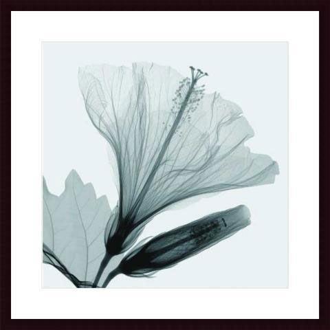 Steven Meyers 'Hibiscus Bud' Wood Framed Art Print