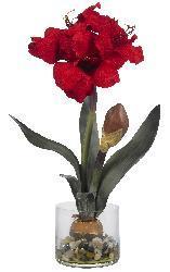 Amaryllis in Round Vase
