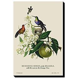 'Brazil's Humming Birds' Giclee Canvas Art