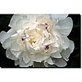 Kurt Shaffer 'Perfect Peony' Gallery-wrapped Art