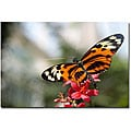 Cary Hahn 'Tropical Butterfly' Gallery-wrapped Canvas Art