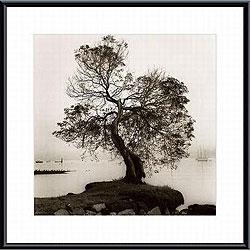 Coast Oak Tree Metal Framed Art