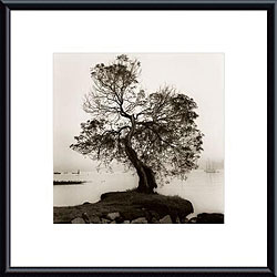 Alan Blaustein 'Coast Oak Tree' Metal Framed Art