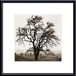 Alan Blaustein 'Country Oak Tree' Metal Framed Photography Art