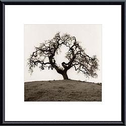 Alan Blaustein 'Hillside Oak Tree' Metal Framed Art Print