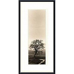 Alan Blaustein 'Valley Oak Tree' Framed Print