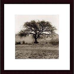 Alan Blaustein 'Willow Tree' Framed Art Print