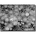 Kurt Shaffer 'Pattern on a Pond II' Gallery-wrapped Canvas Art