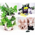 Indoor Herbal Tea Herb Garden Starter Kit