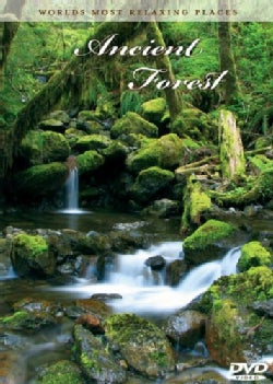 Ancient Forest (DVD)