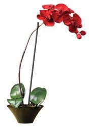 Holiday Faux Phalaenopsis Orchid Arrangement