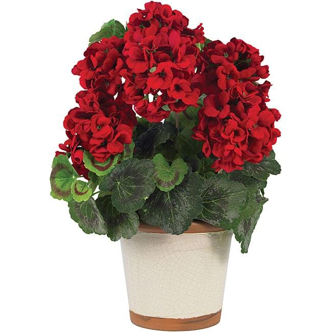 Silk Geranium Flower Plant