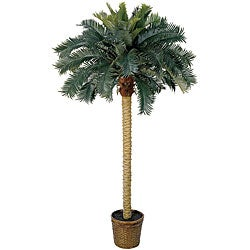 Sago Palm 6-foot Silk Tree