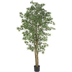 Japanese Maple 6-foot Silk Tree