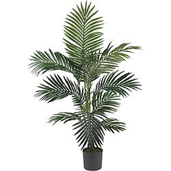 Kentia Palm 4-foot Silk Tree