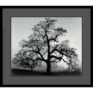 Ansel Adams 'Oak Tree, Sunset City, California, 1962' Framed Art Print
