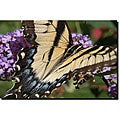 Kurt Shaffer 'Mariposa' Gallery-wrapped Canvas Art