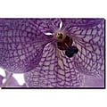 Kurt Shaffer 'Orchid Veins' Gallery-wrapped Canvas Art