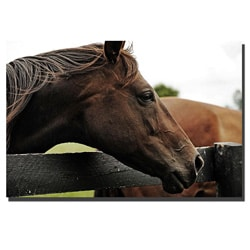 Preston 'Horse 22' Gallery-wrapped Canvas