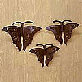 Set of 3 'Monarch Butterflies' Iron Wall Adornments (Mexico)