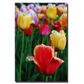 Kurt Shaffer 'In Among the Tulips II' Canvas Art