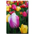 Kurt Shaffer 'In Among the Tulips I' Canvas Art