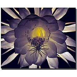 Kurt Shaffer 'Floral Contrast' Canvas Art