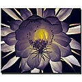 Kurt Shaffer 'Floral Contrast' Canvas Art