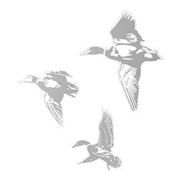 Ducks Sudden Shadows Wall Decal