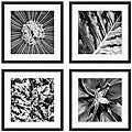 Michael Joseph 'Pollinator Series' 4-piece Framed Art Set