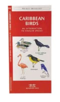 Caribbean Birds: A Folding Pocket Guide to Familiar Species (Paperback)